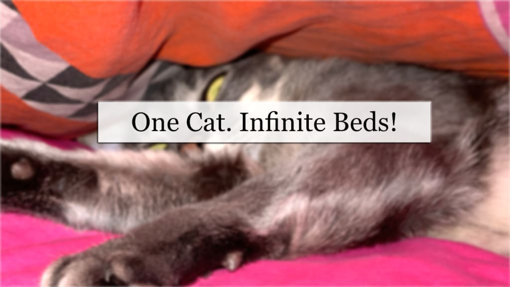 One Cat. Infinite Beds!