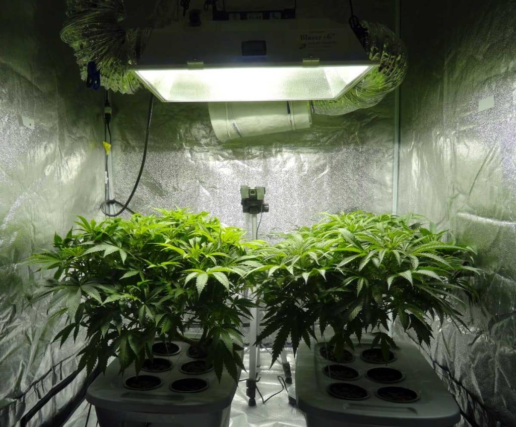 Marijuana: Good or Bad?