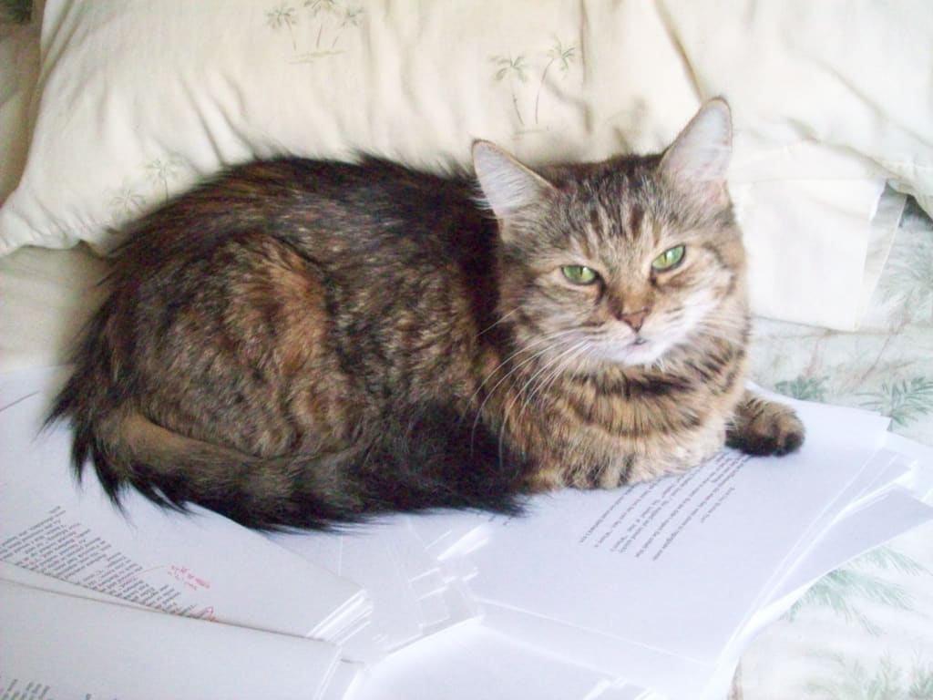 Cats: The Perfect Writer's Companion