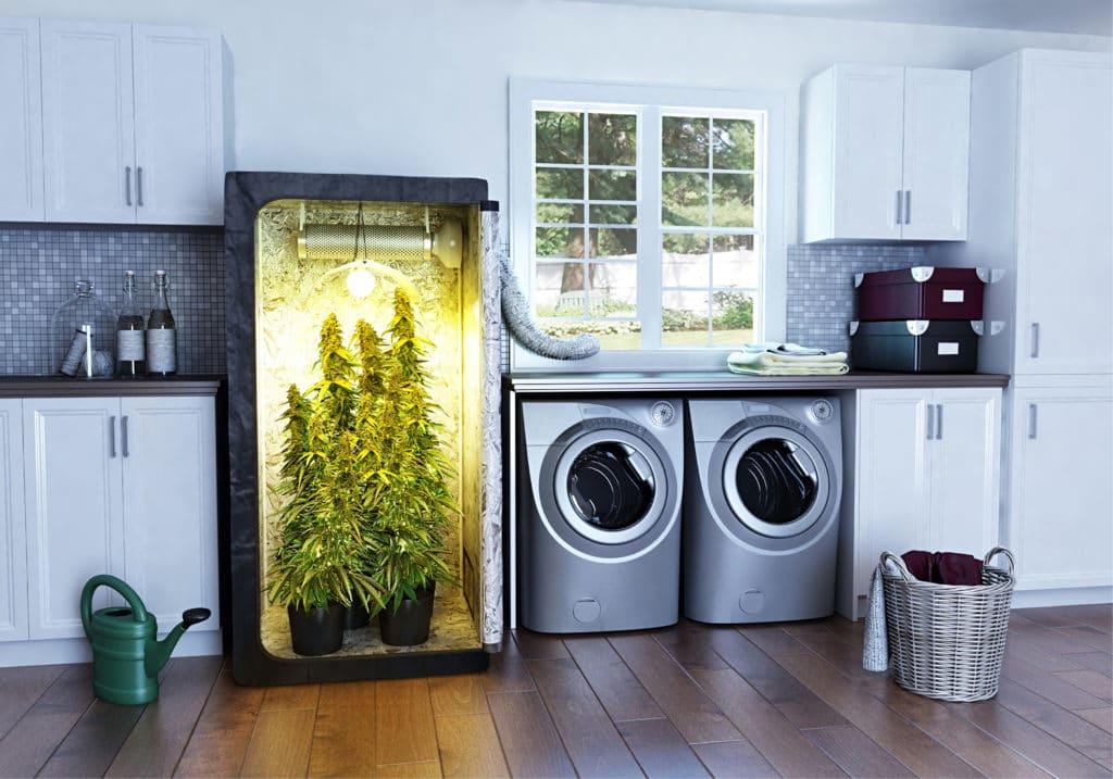 Best Marijuana Grow Kits on Amazon You Can Buy