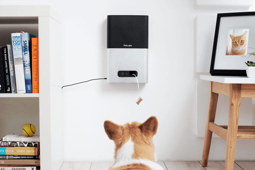 Best Dog Camera Treat Dispensers