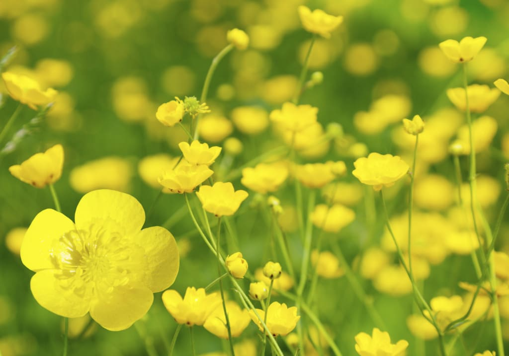 Wildflowers That You Shouldn't Eat