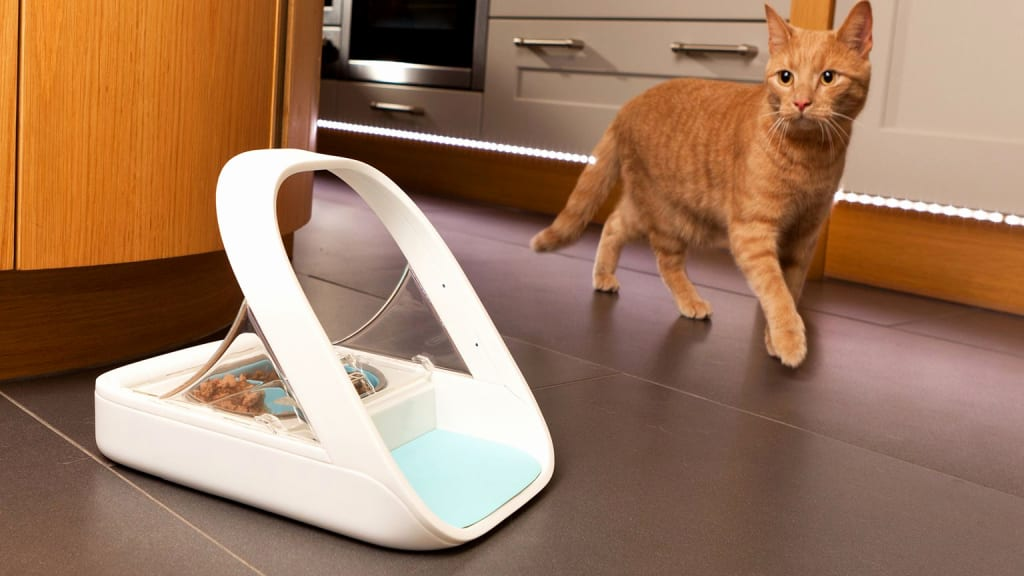 Feeding Multiple Pets Is Easier Than Ever with SureFeed