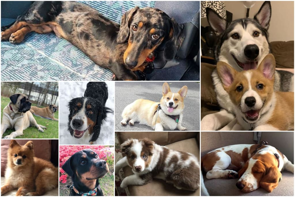 9 Dog Instagrams You Need to Follow