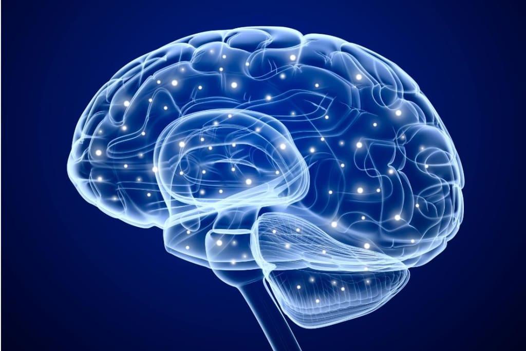 Evolution of the Big Brain