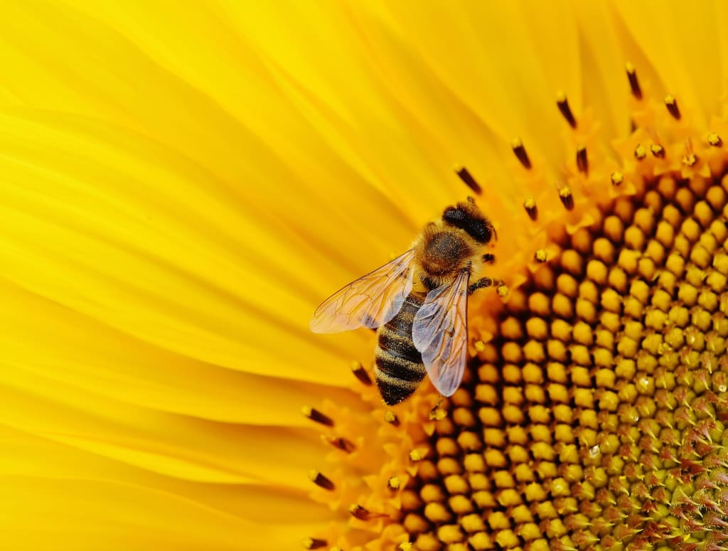 Why Are Our Bees Dying And What Can You Do About It?