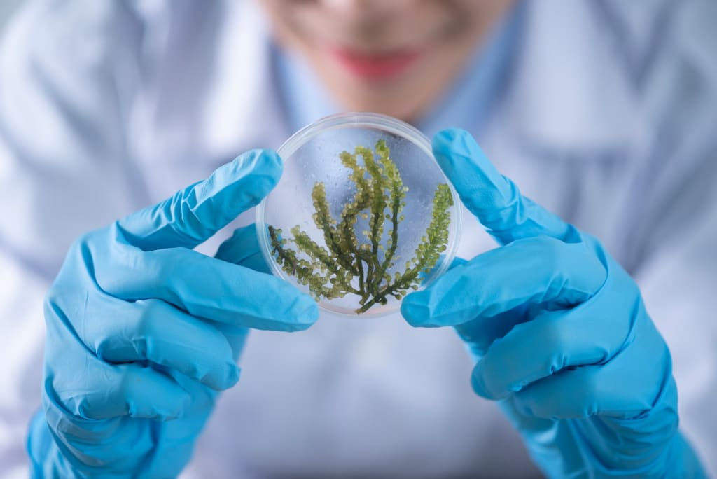 New Frontiers in Bio-Inspired Design