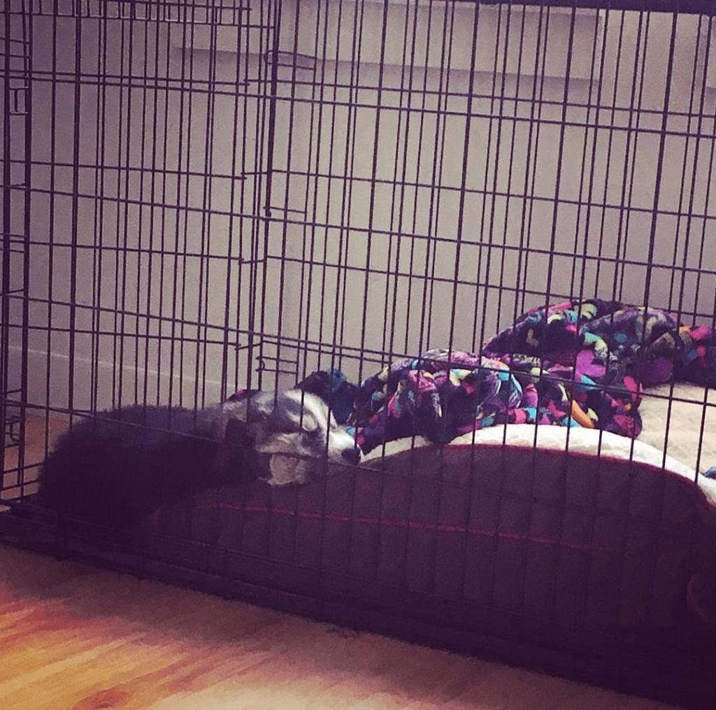 Husky Houdini