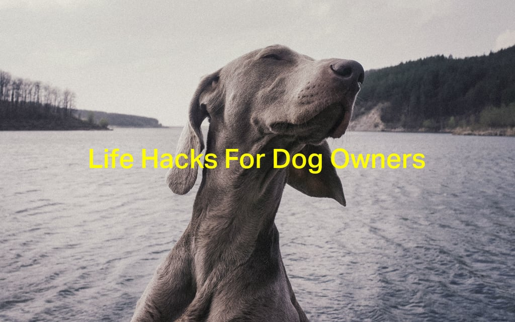 Life Hacks Every Dog Owner Needs to Know