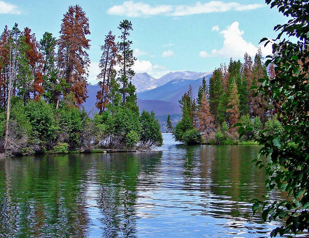 The Trees of Grand Lake, Colorado