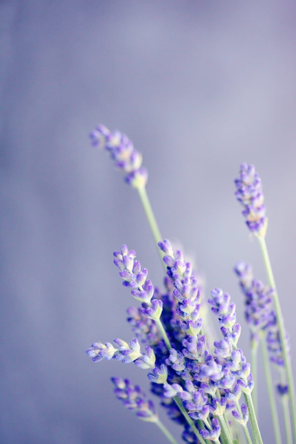Aromatherapy for Mental Wellness