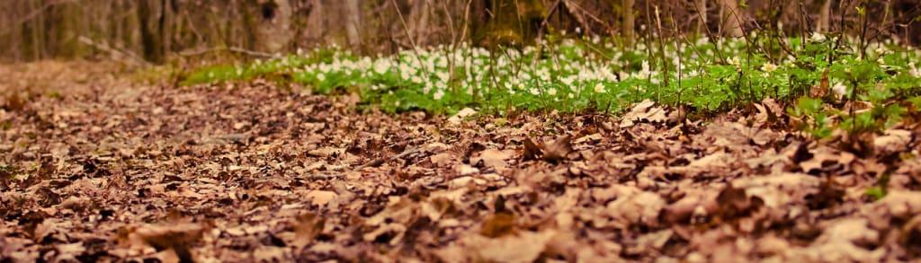 An Autumn's Spring