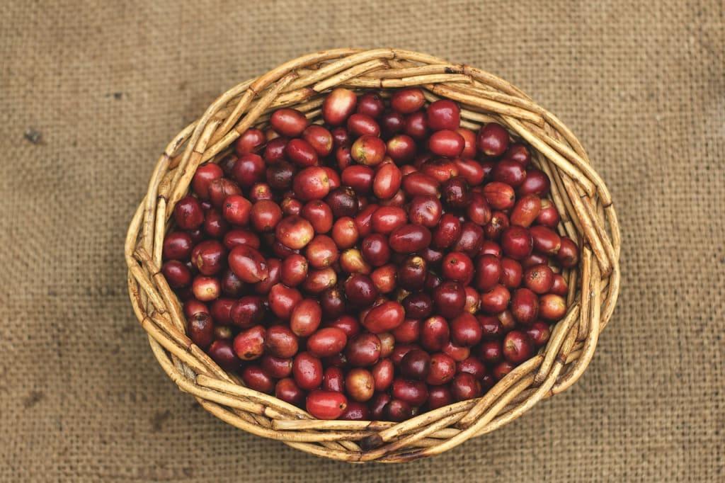 Five Reasons to Drink Organic Coffee