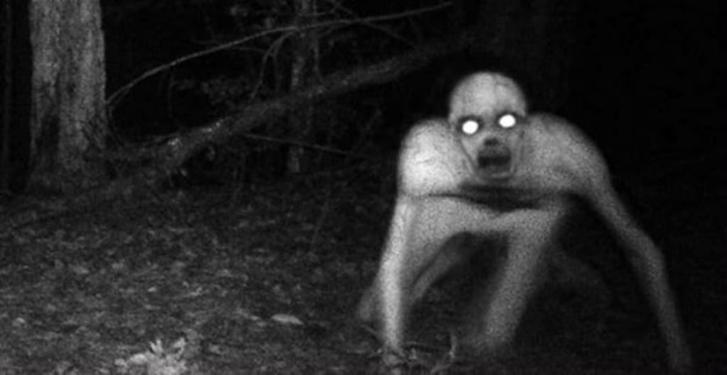 Weirdest Creatures Ever Caught on Camera
