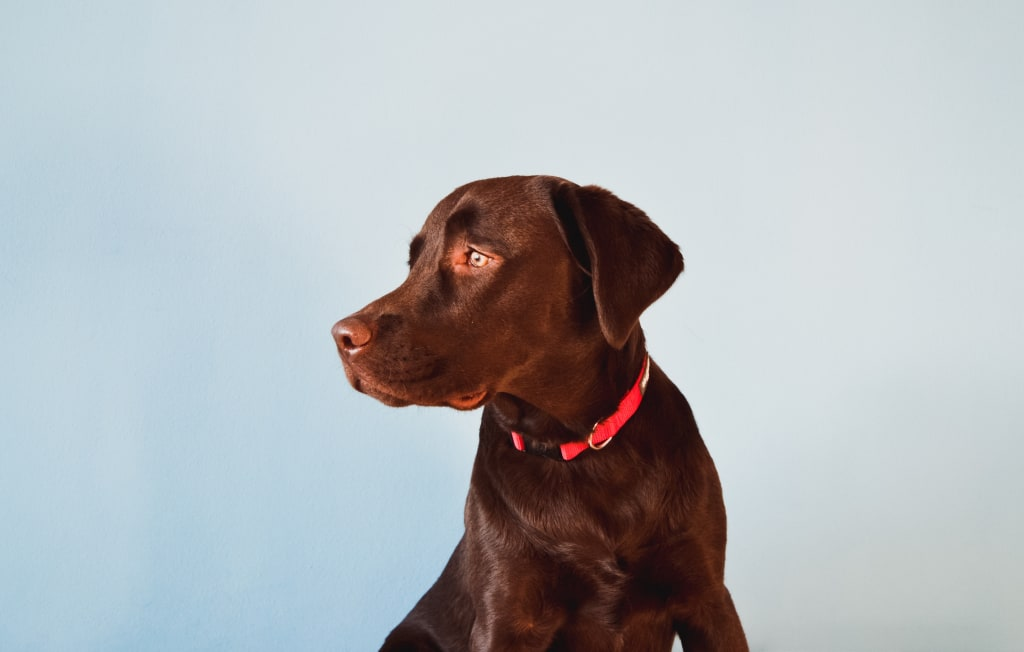 What Breed Is Your Dog, Really? Find Out with Embark