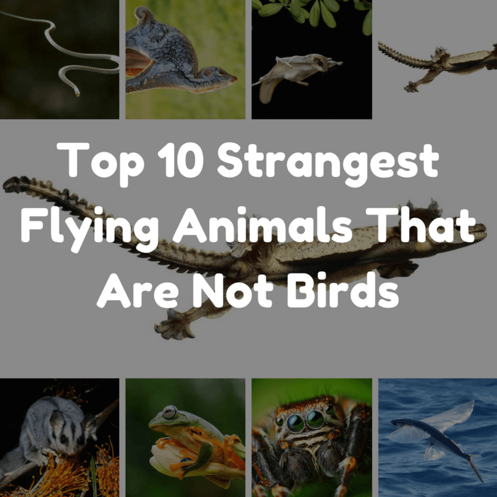 Top 10 Strangest Flying Animals That Are Not Birds