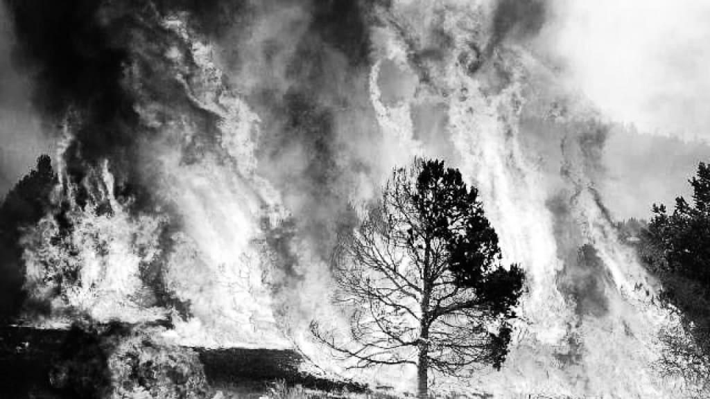 Tree Sin Fire