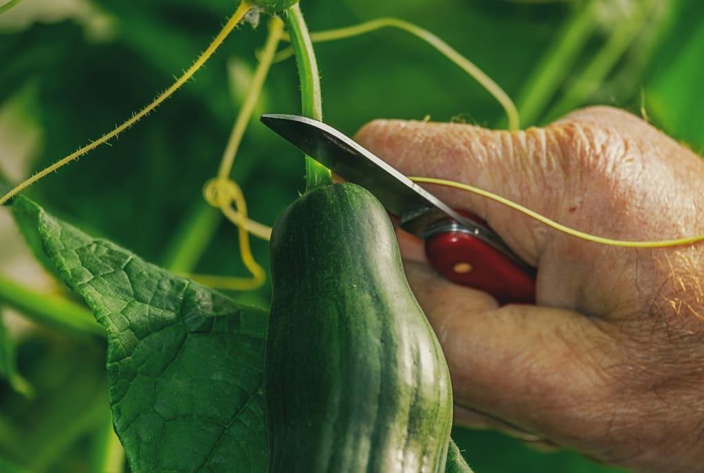 6 Benefits of Growing Your Own Food Garden