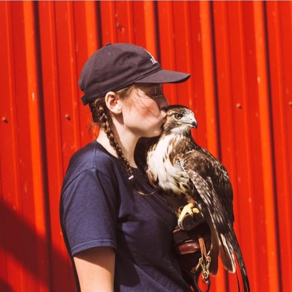 My Hawk, Alfie