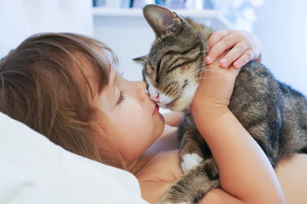 10 Reasons Cats Make Great Pets