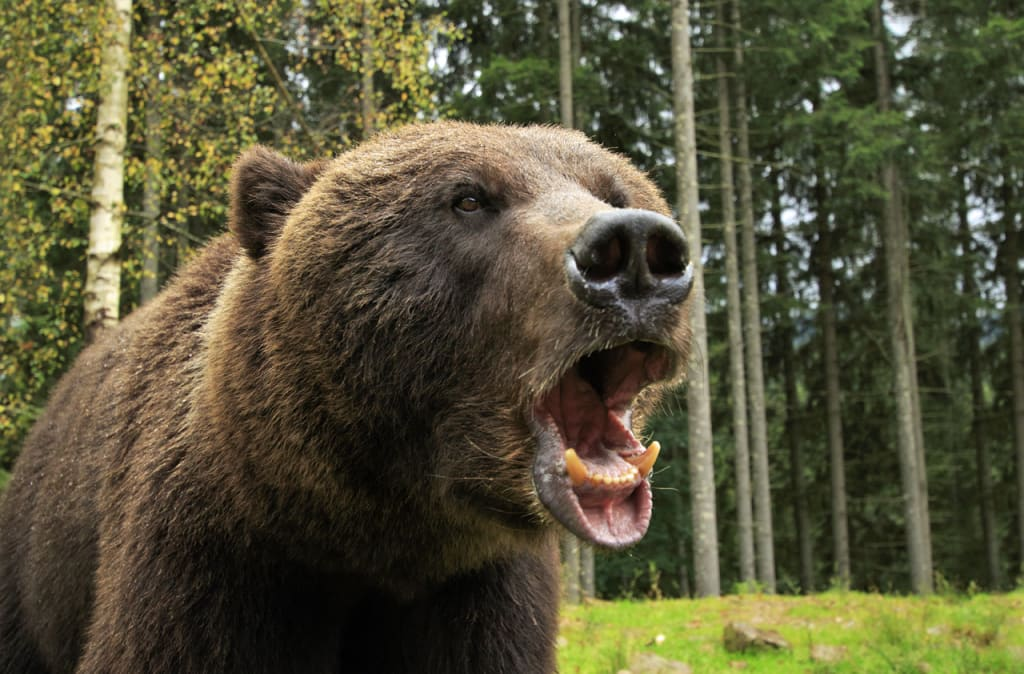 10 Signs You're in a Bear Market
