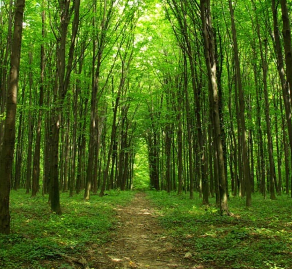 Like the Trees