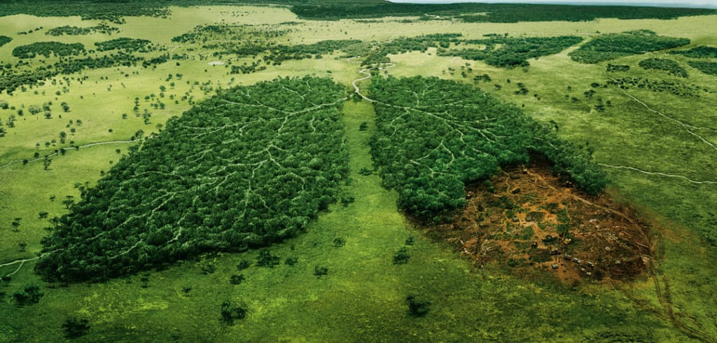 Image result for what is deforestation