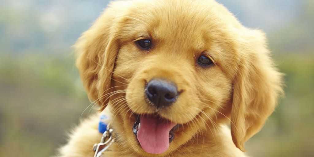 What to Expect: Pup Owners