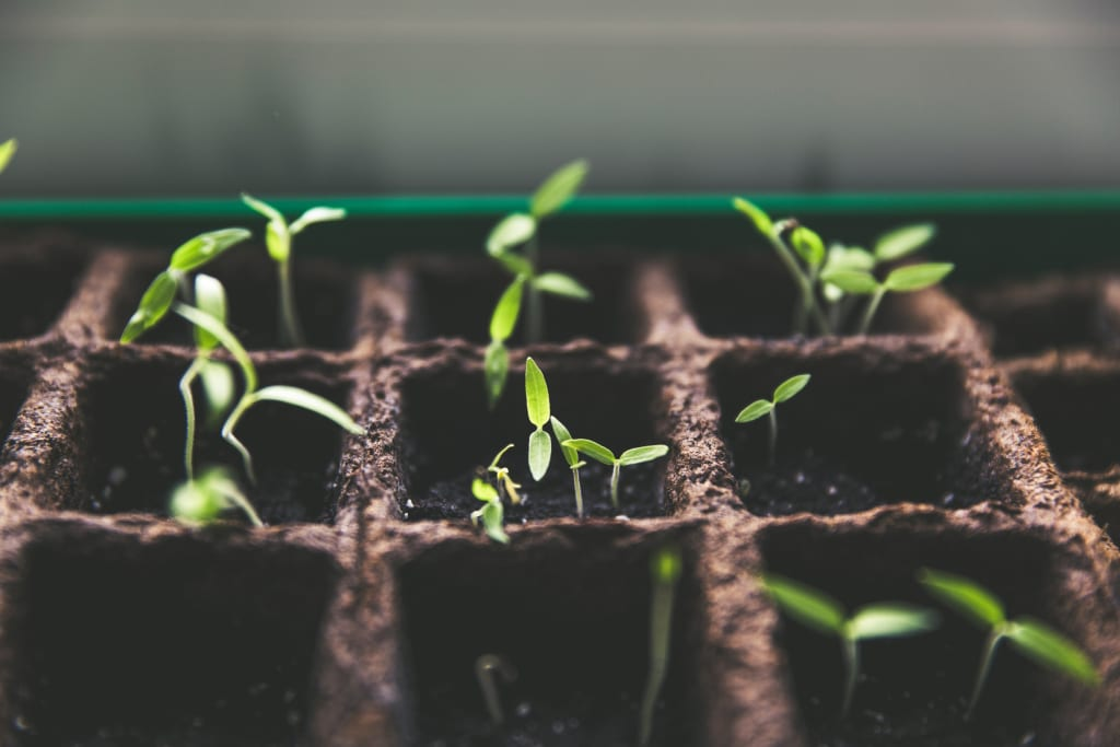 My Plant-Based Journey
