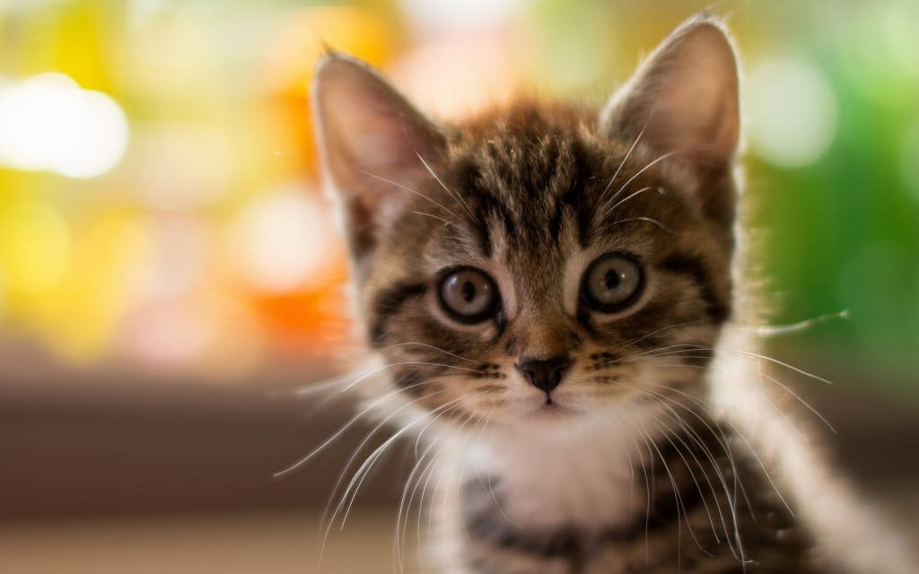 Best Breeds of Cats