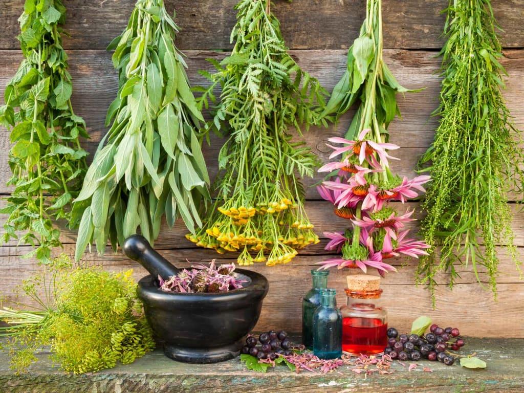 Benefits of Botanical Medicine