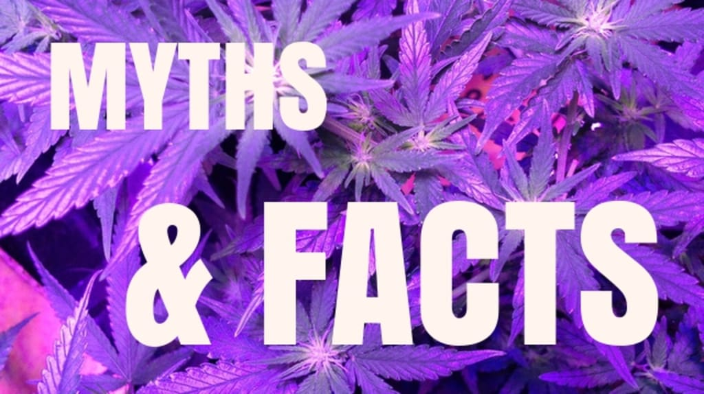 Myths and Facts About Cannabis