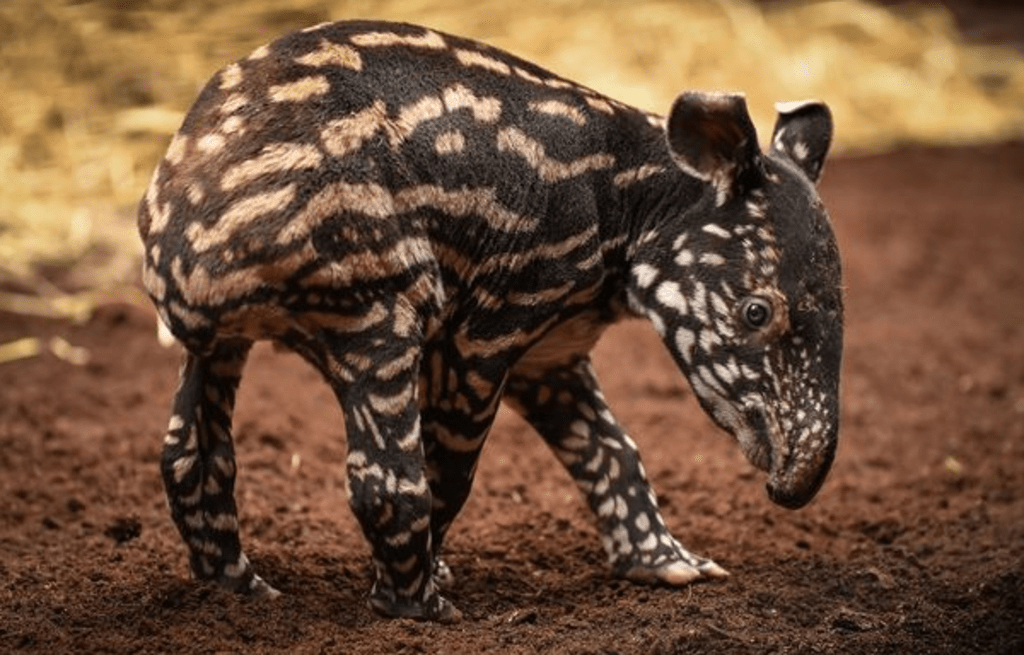 The Cutest Animals You've Never Heard Of