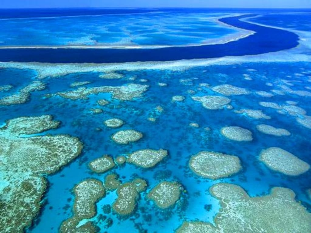 The Tragedy of the Great Barrier Reef