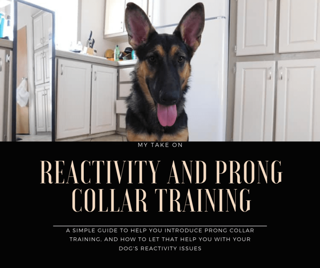 Reactivity & Prong Collar Training