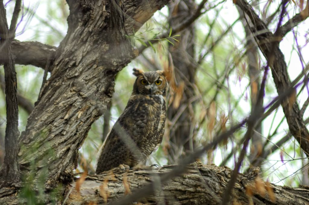 Why You Should Take Up Birding