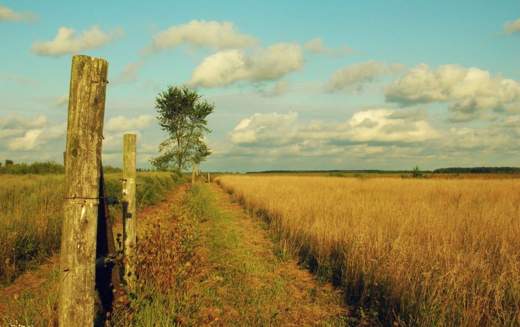 Walking Thru a Meadow