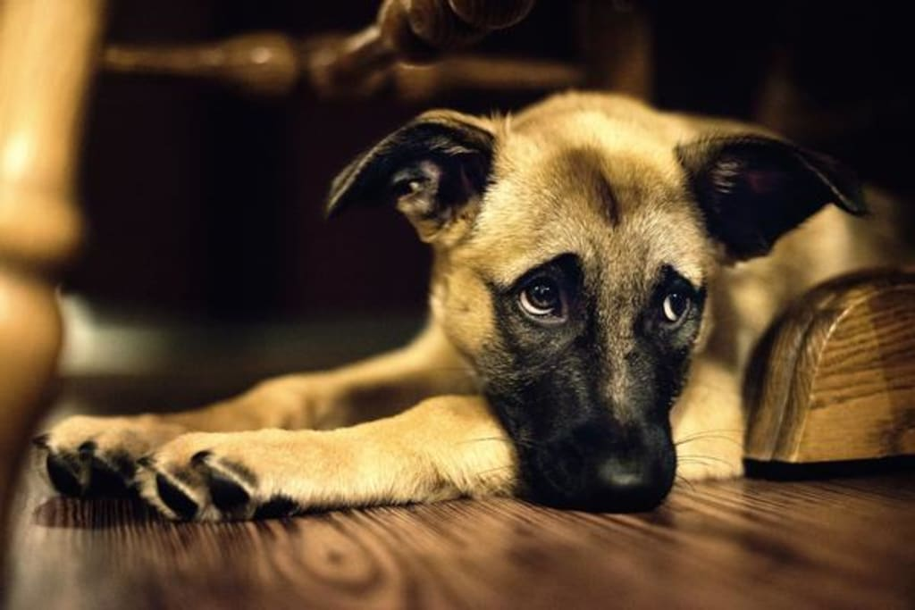 How to Prevent Your Dog from Getting Separation Disorder