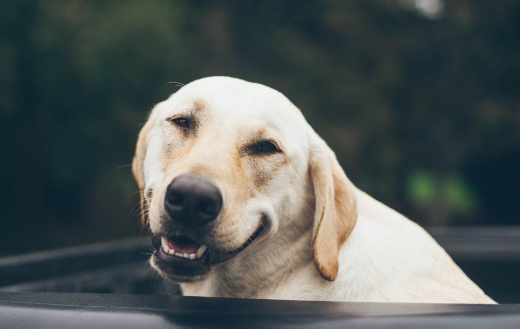 11 Cute Dog Calendars You'll Adore