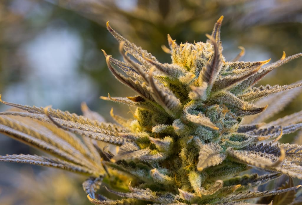 The Marijuana Aficionado's Guide to a Pot-Friendly Vacation