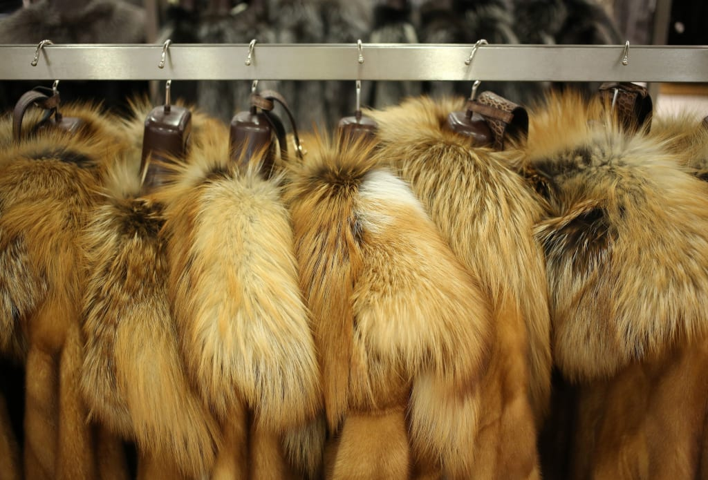 What Is the Future of Fur in Fashion?