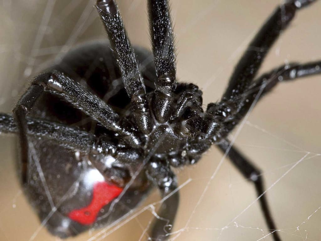 Black Widow, Part Two