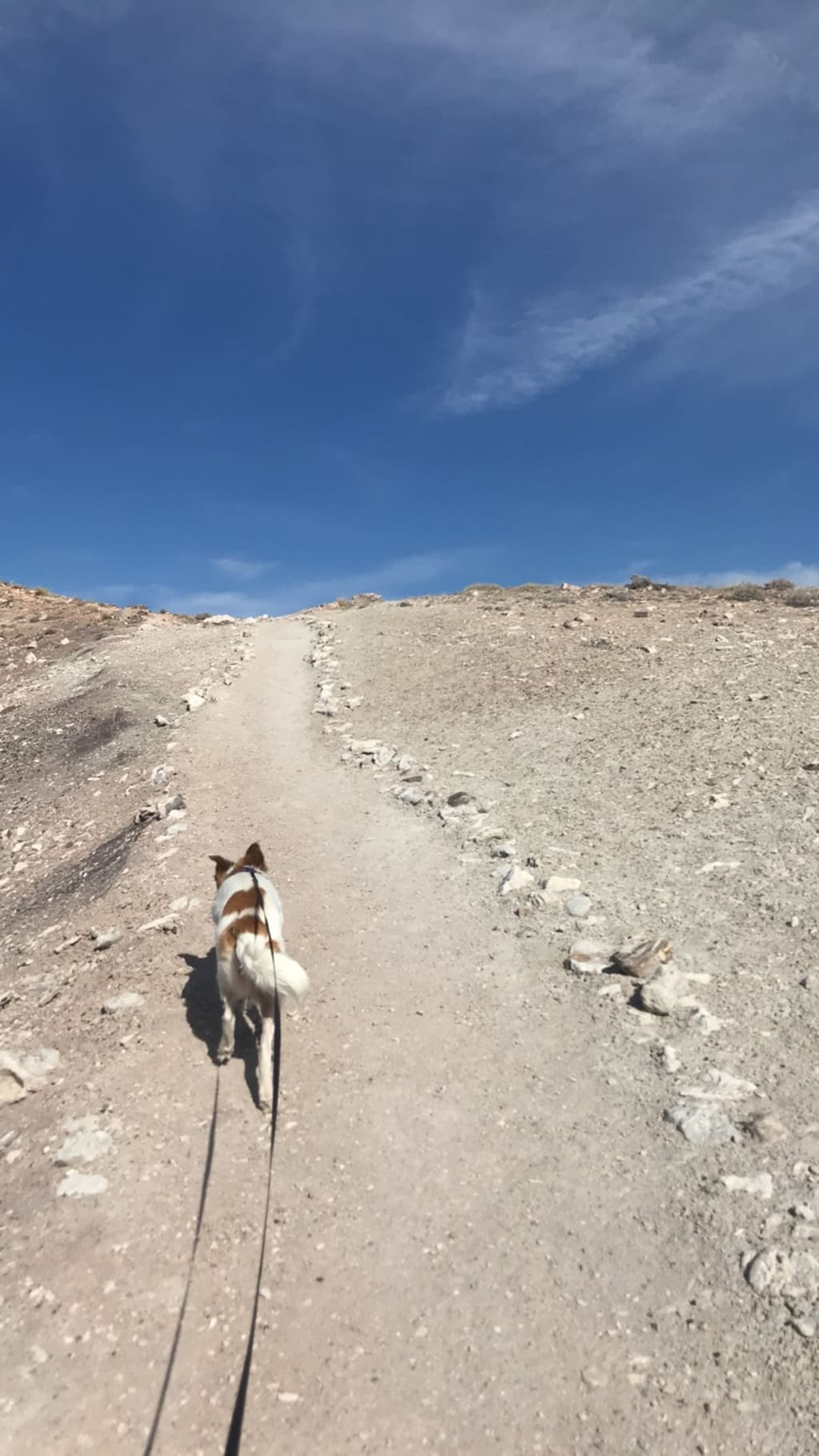 Lessons Learned Traveling with a Dog