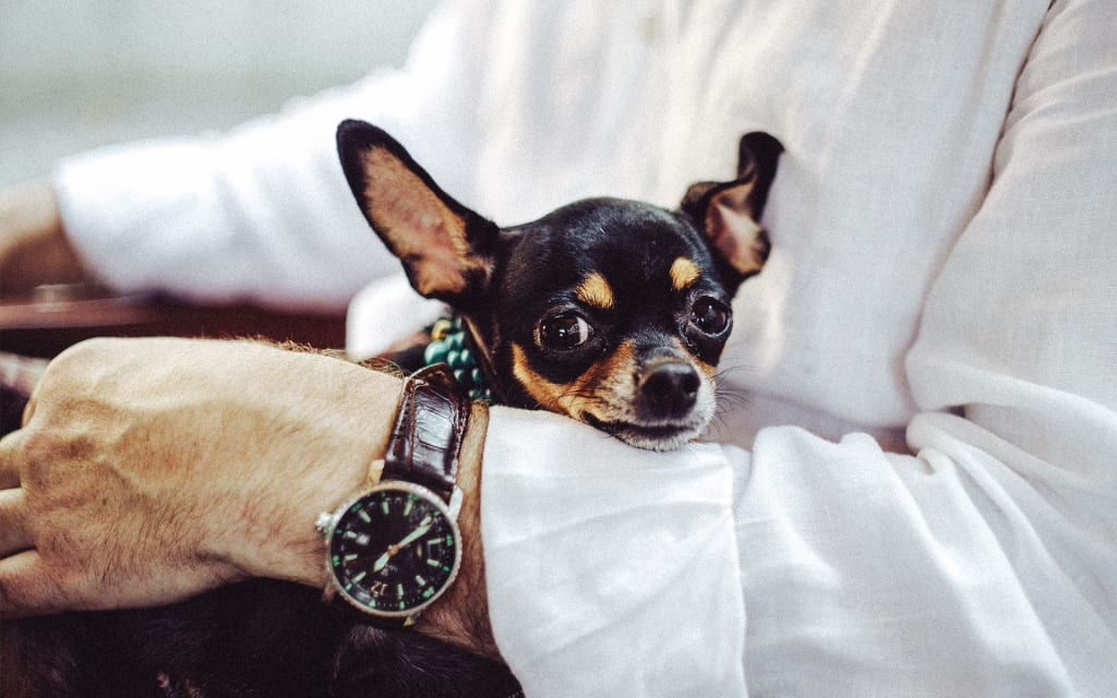 Trending Things on Amazon Every Dog Owner Should Own