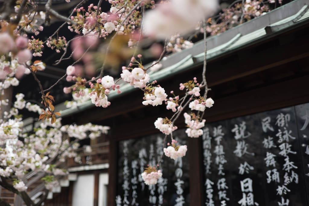 10 Reasons Why I Want to Visit Japan, and Why You Should Too!