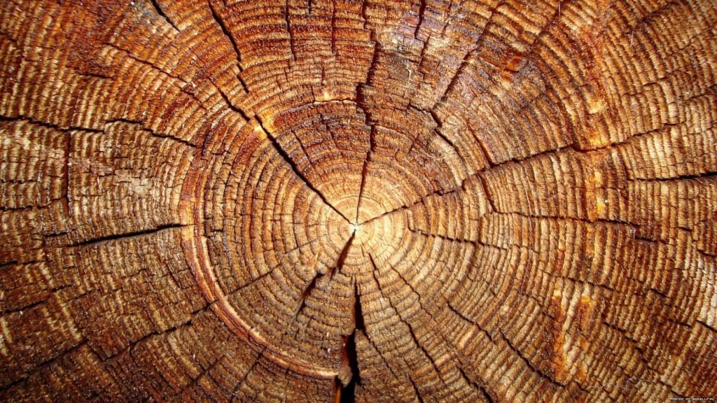 Which Are The Best Types Of Woods To Burn In An Outdoor