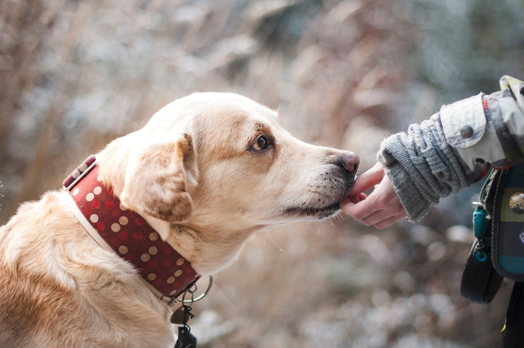 The Hidden Responsibilities of Owning a Pet