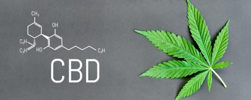 Can CBD-Rich Cannabis Help to Treat Lyme Disease?