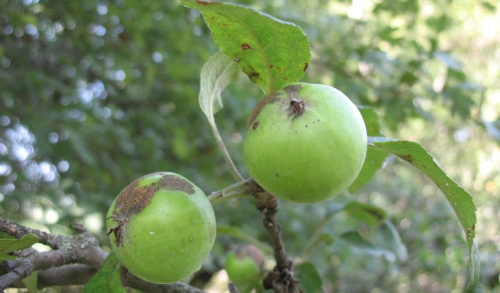 10 Amazing Facts About Apples