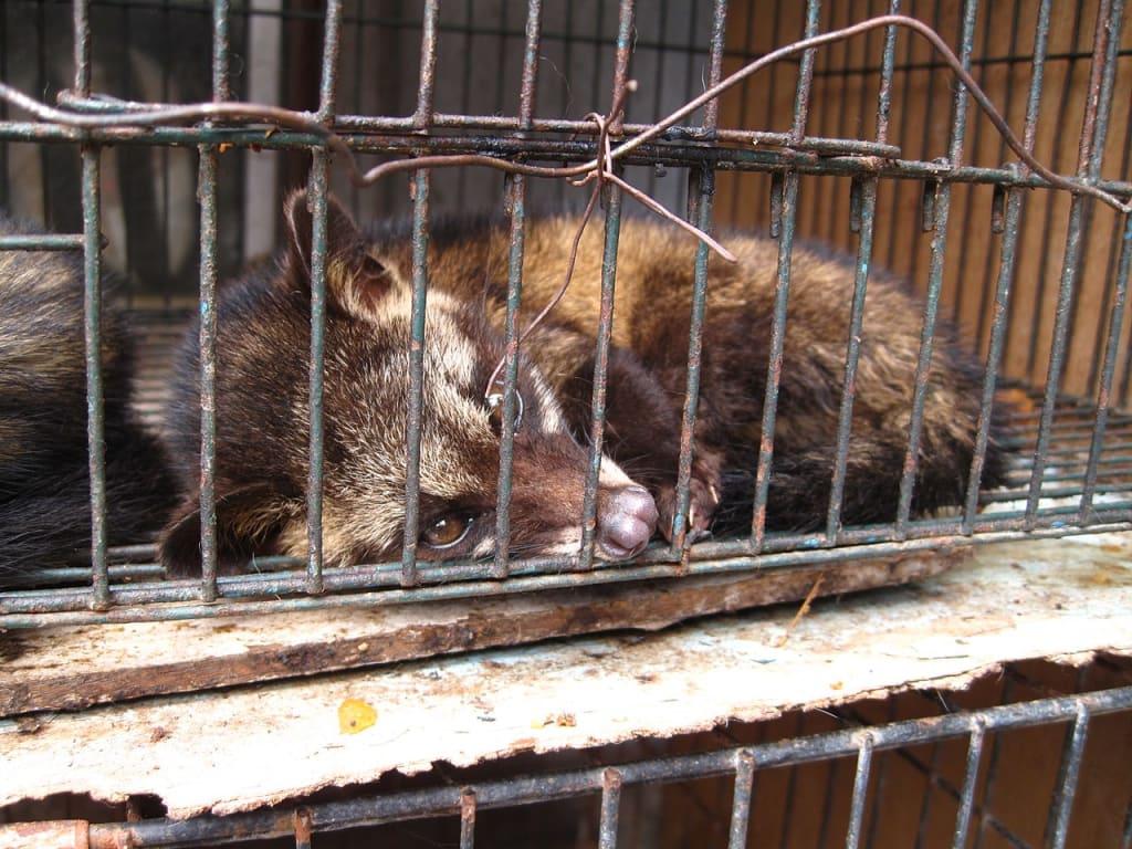 Animal Welfare Act 2006: Simplified.